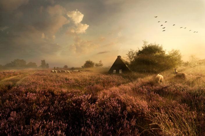 Portfolio Maartje Roos - Drentse Heide