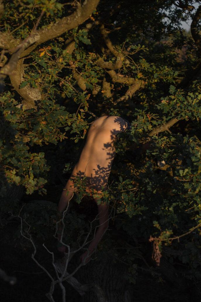 David van Dartel - Ruben in een boom